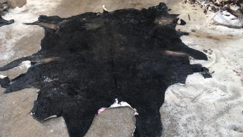 salted steers hides